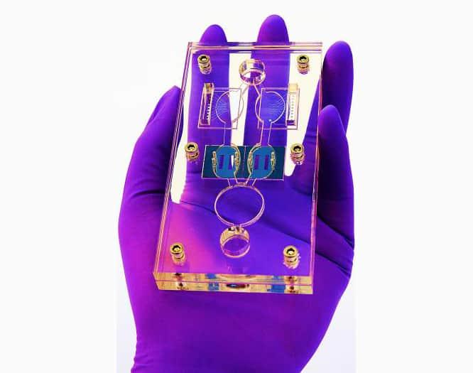 Multi-Organ Lab-on-a-Chip for Cancer Drug Testing