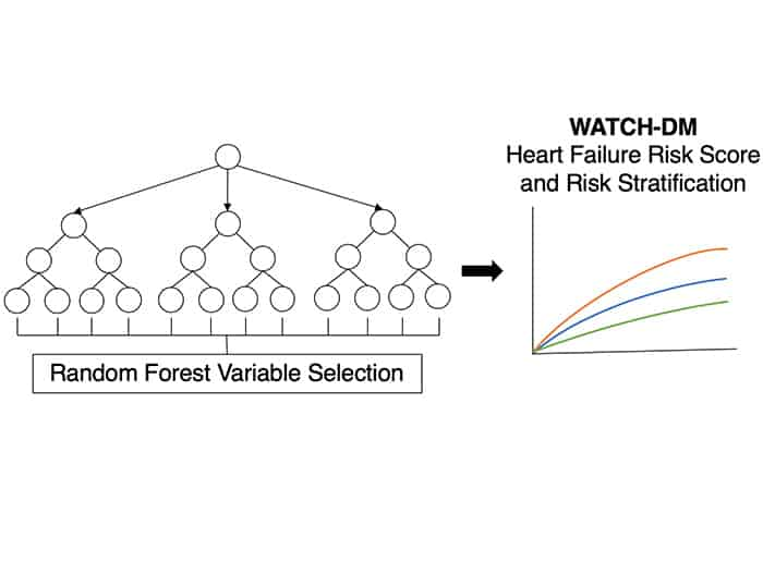Machine Learning Helps Predict Risk of Heart Failure in Patients with Diabetes